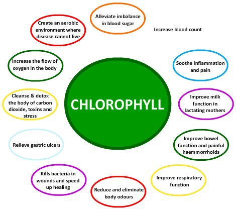 chlorofyll