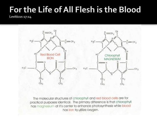 Molecuul chlorofyll vs rode bloedcel