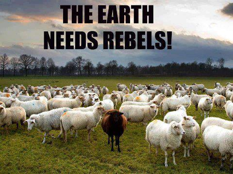 earth needs