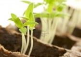 kiemen-planten-met-een-witte-achtergrond