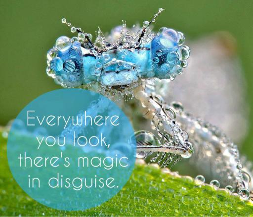 magic in disguise