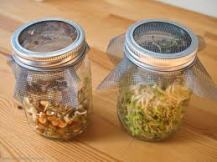 Sprouts jar