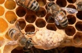 bijen bovenaanzicht