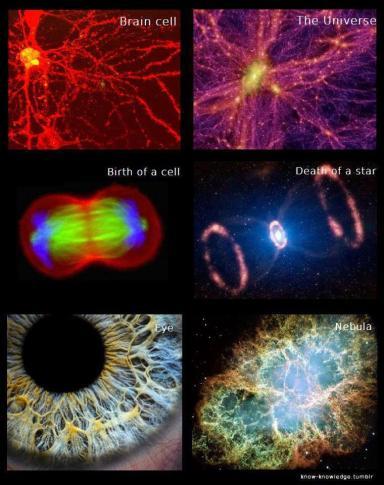 braincell vs universe