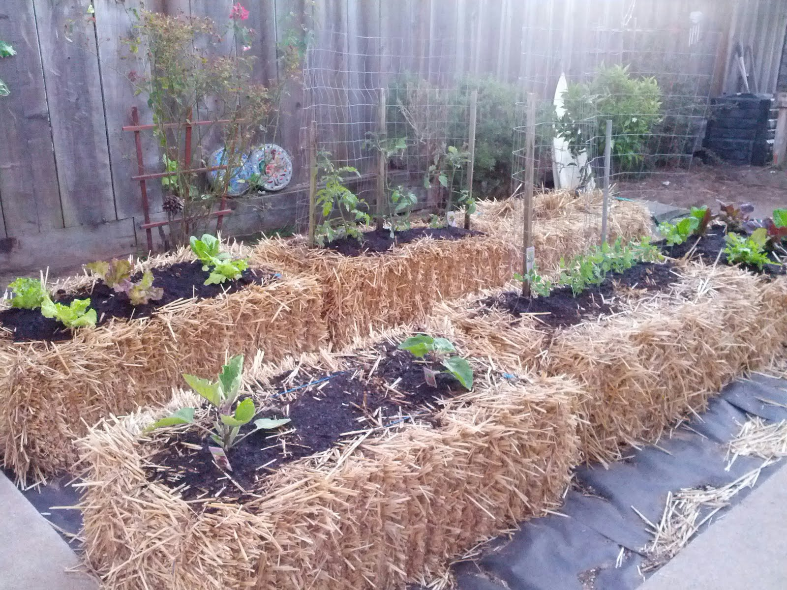 What Is Straw Bale Gardening