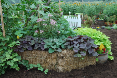 StrawBaleGardenBed